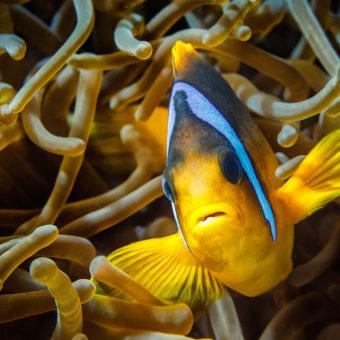 Подводна фотография природа